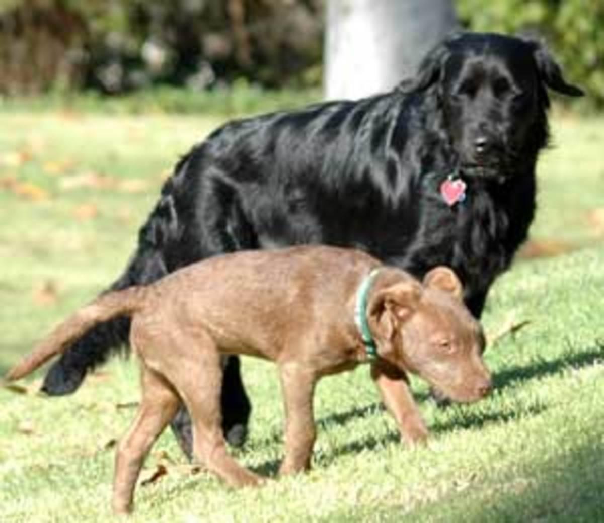 Organic Dogs