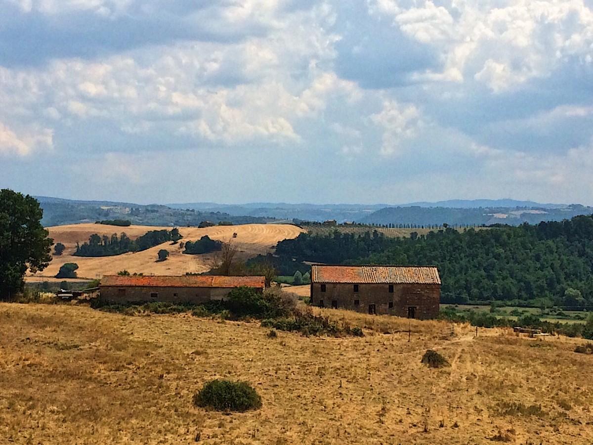Black Truffle Hunting in Umbria