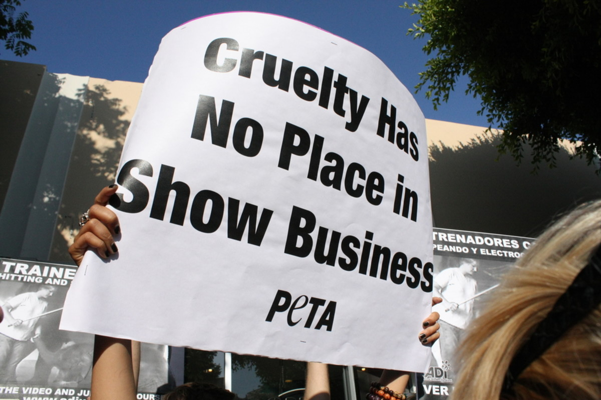 Is Exploiting Sex Okay In The Name of Animal Rights? PETA Debuts Its XXX Domain