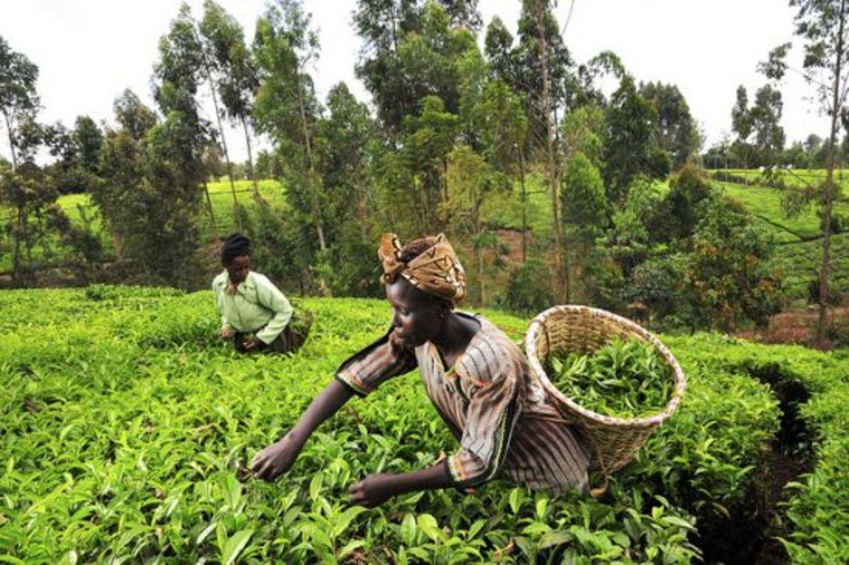 africanfarmers-ccflcr-CIAT
