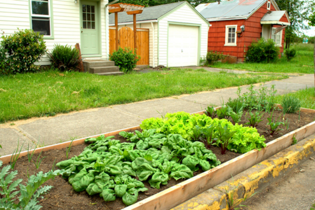 Los Angeles City Sidewalks are About to Become Overgrown with Edible Gardens
