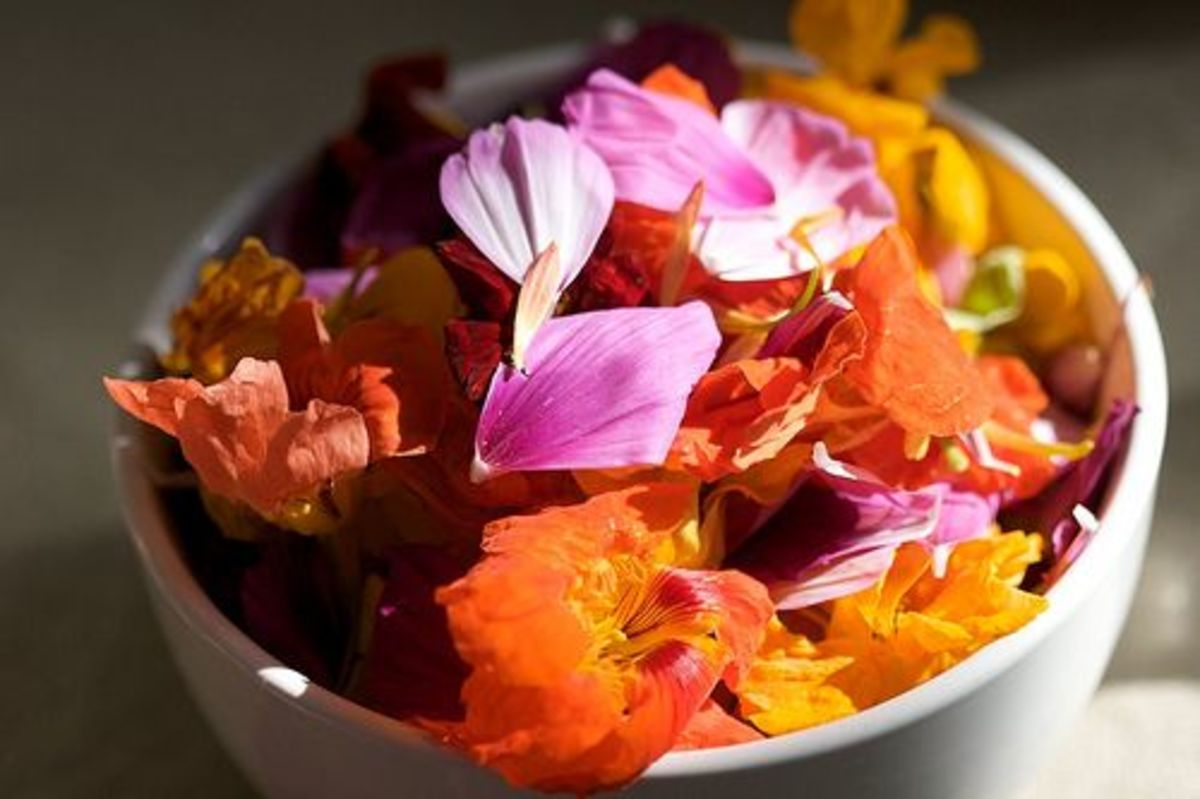 edible-flowers-ccflcr-askabir