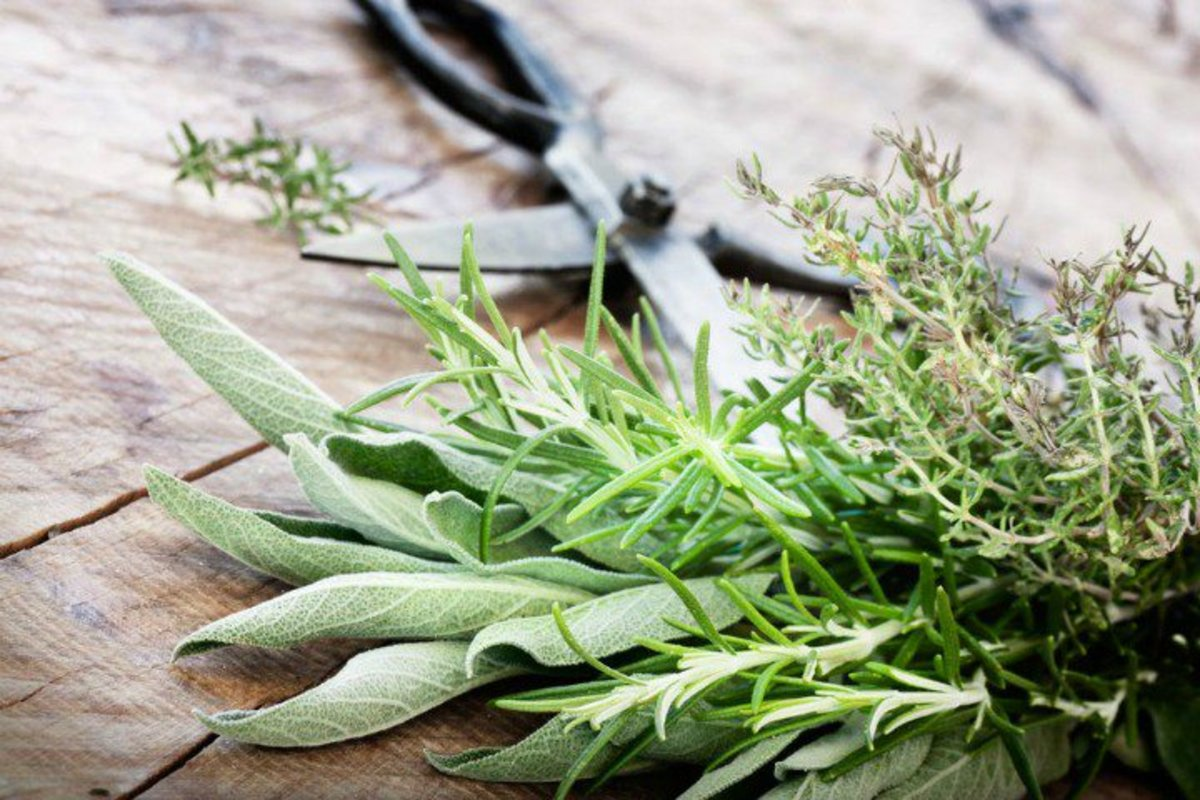 7 Best Herbs for Skin