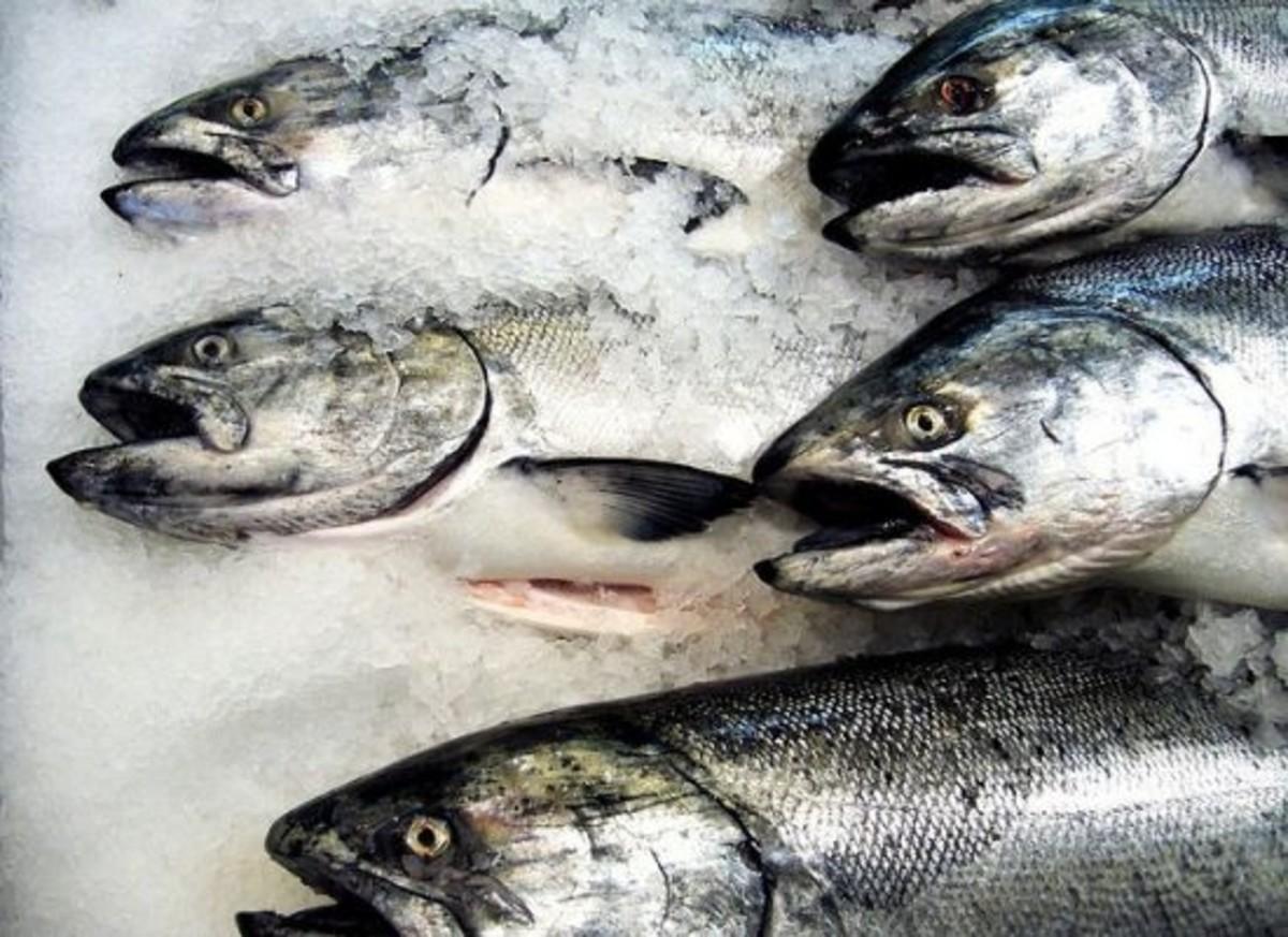 salmon-ccflcr-juliamanzerova