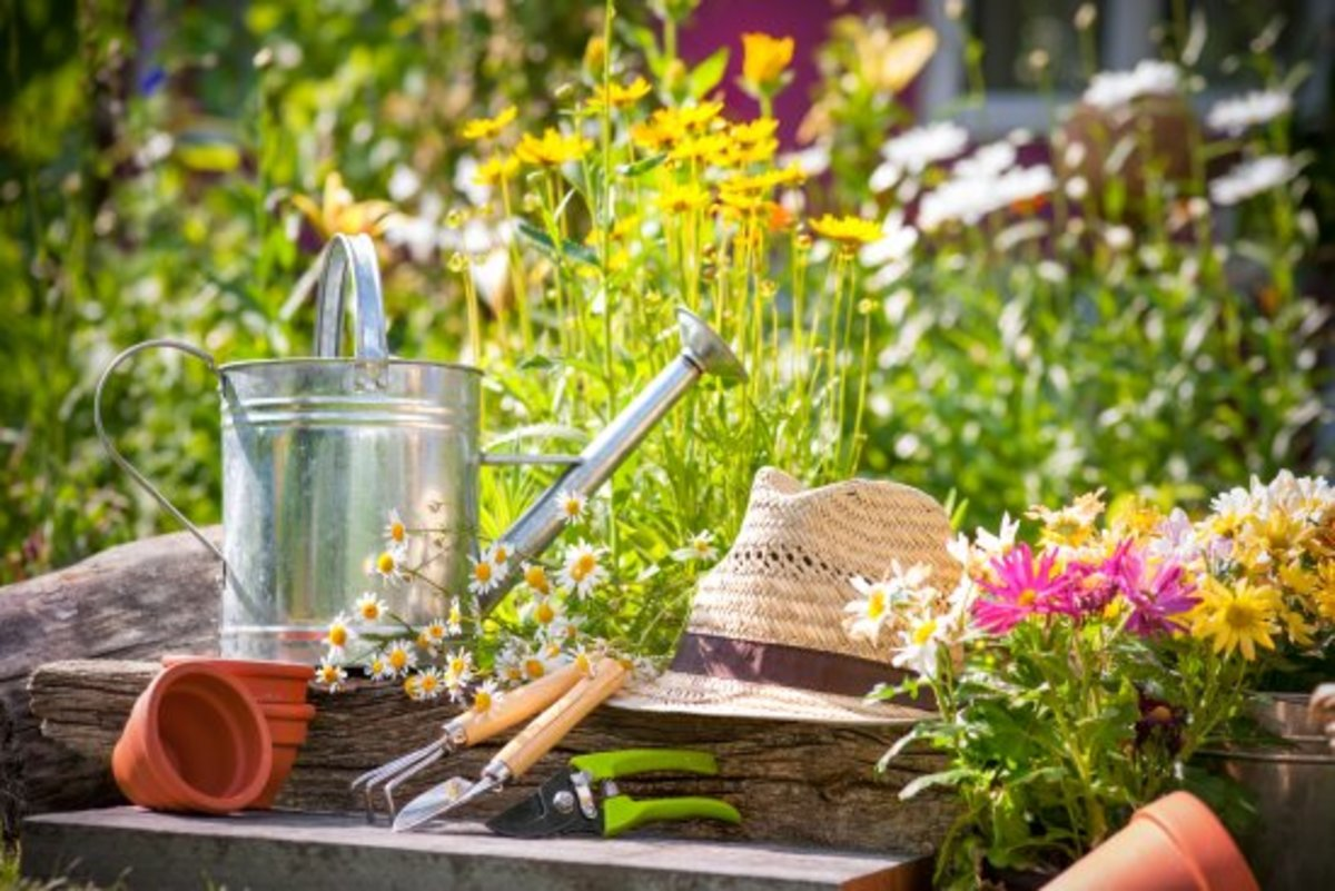 Not in the 1 Percent? Your Guide to Gardening on a Budget