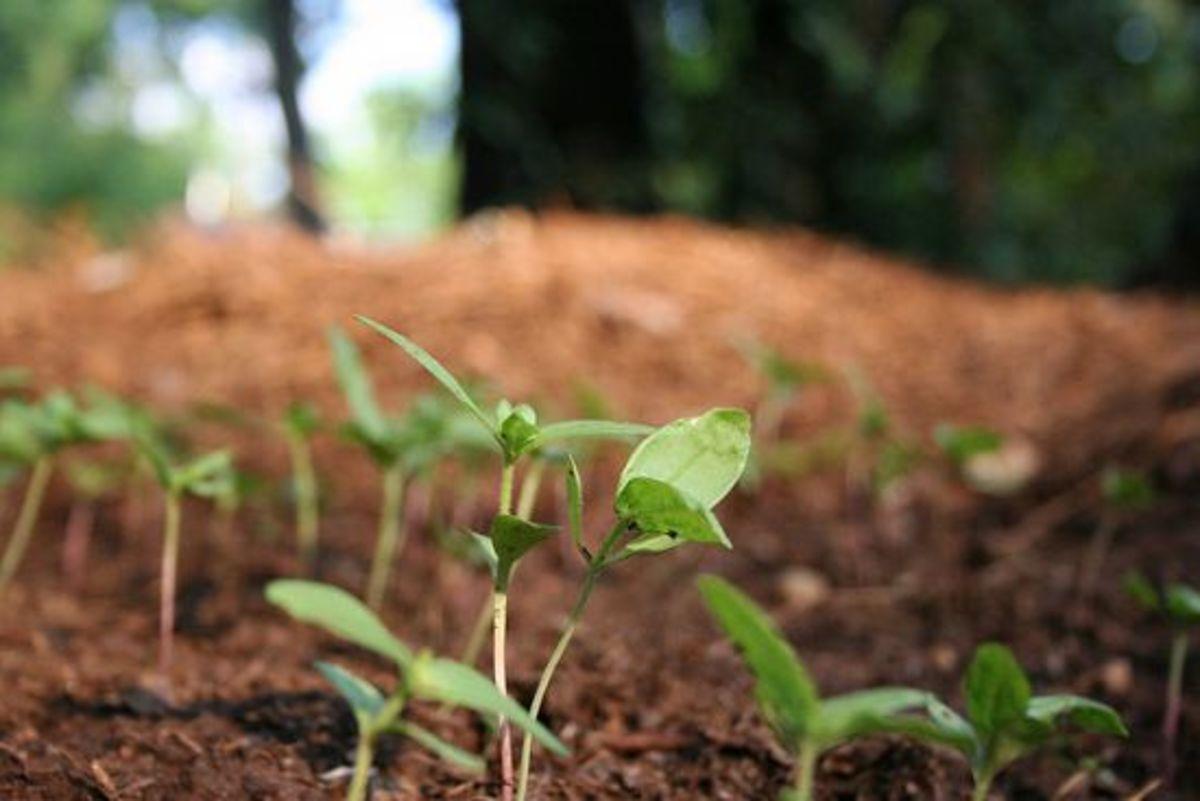 soil-ccflcr-missmoney