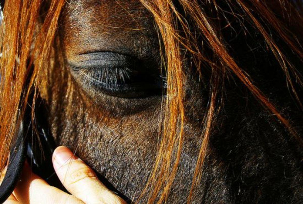 horse2-ccflcr-visualpanic