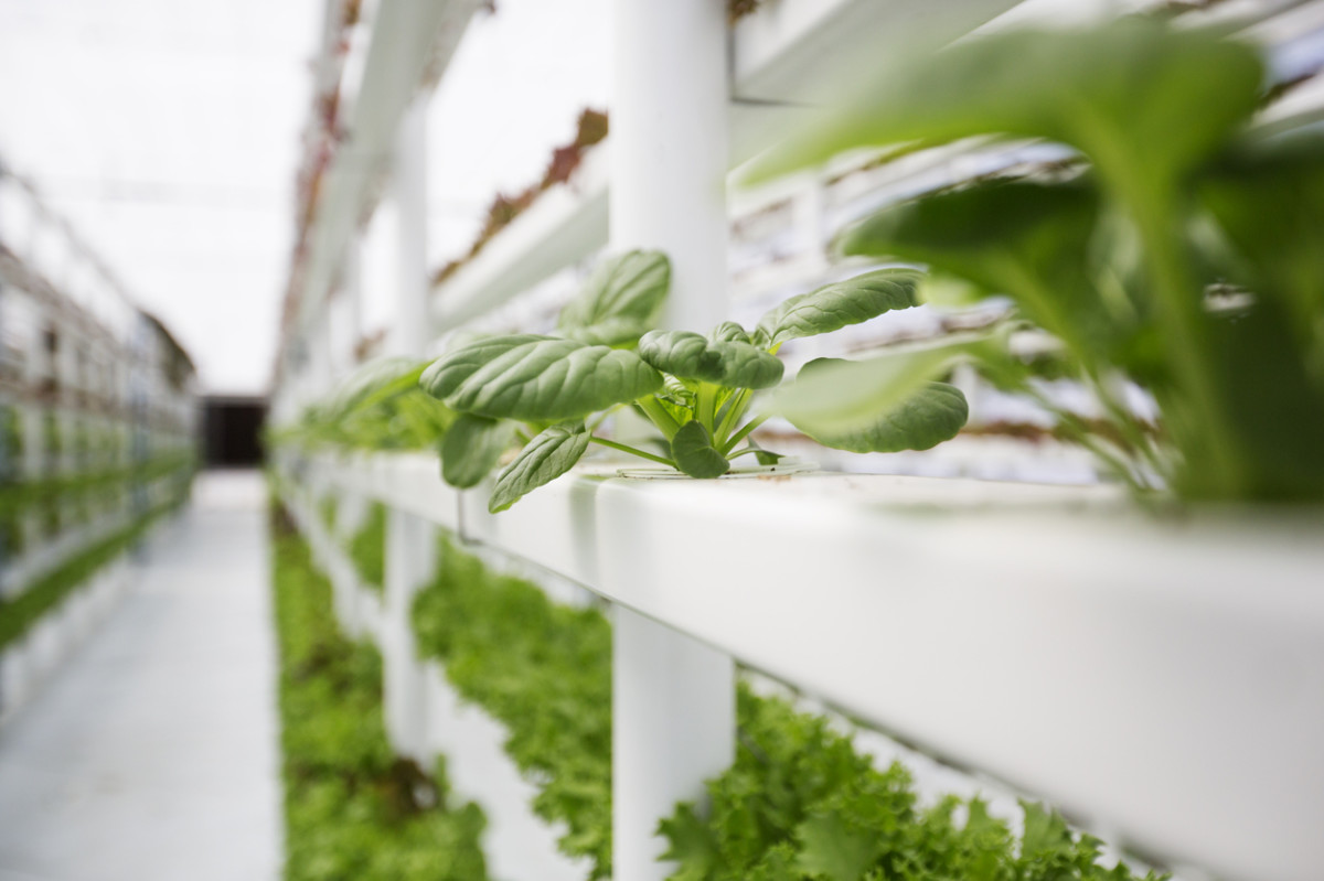 Confusion Over Hydroponics Grows at National Organic Standards Board Meeting