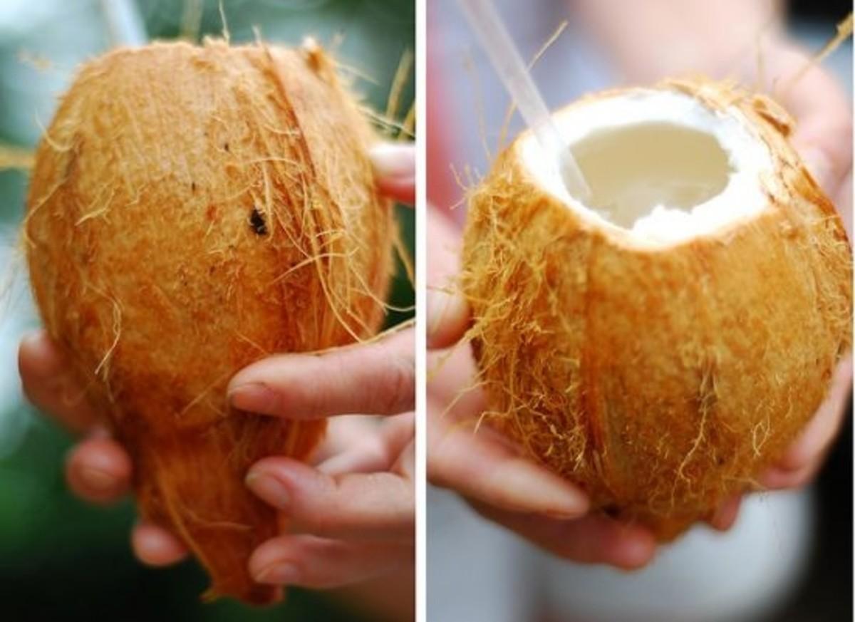 coconut-ccflcr-alonis