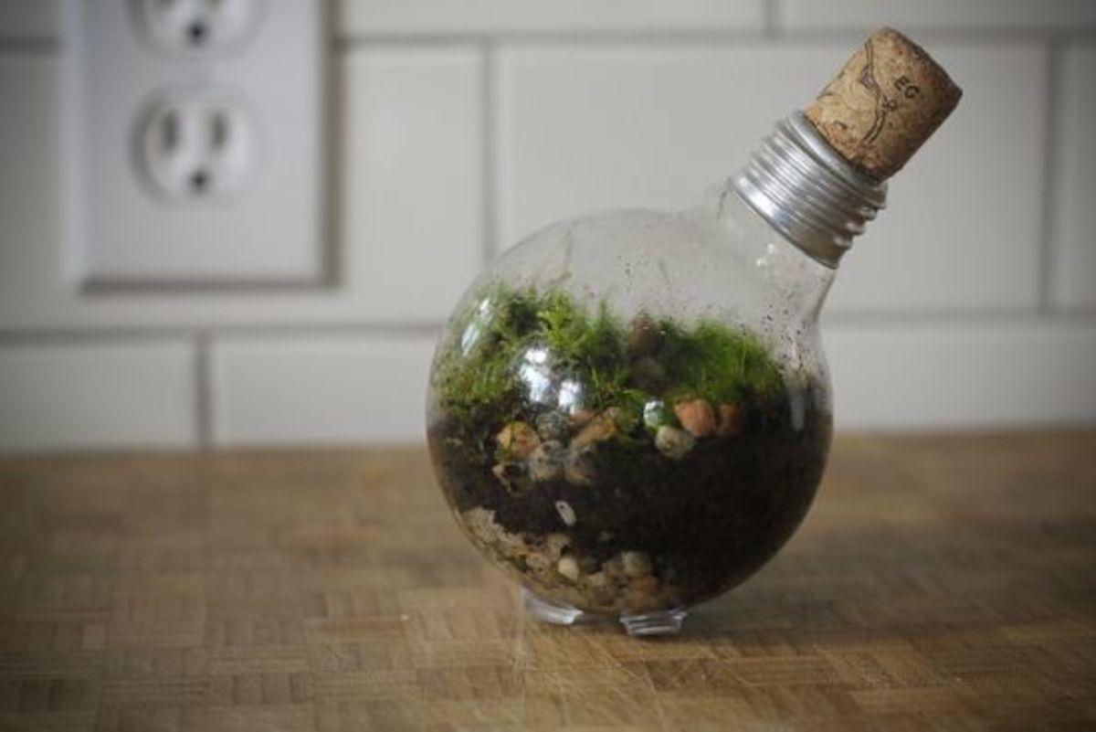 Grow A Miniature Succulent Garden In A Light Bulb Terrarium Organic Authority