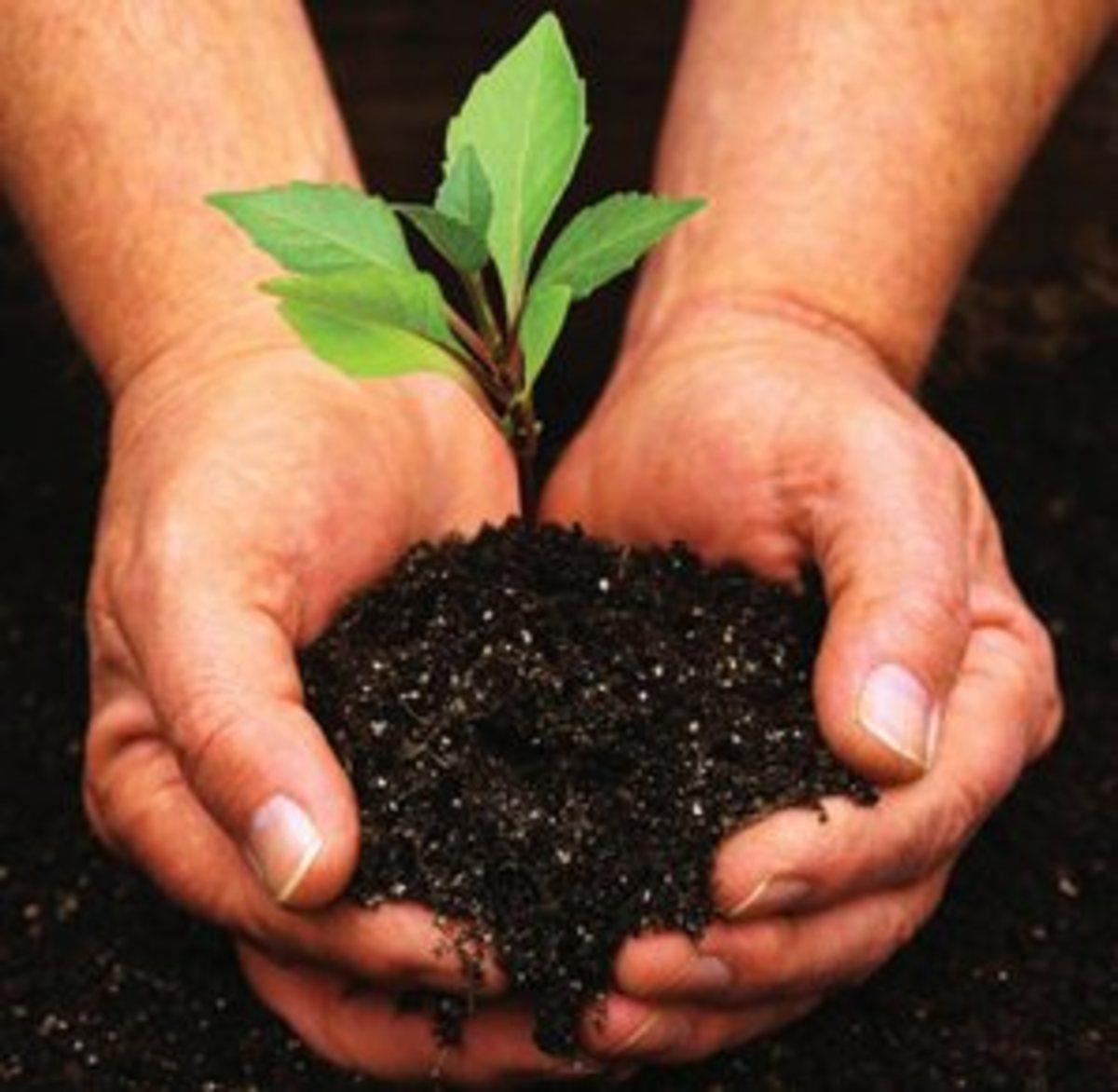ikea-tree-planting11