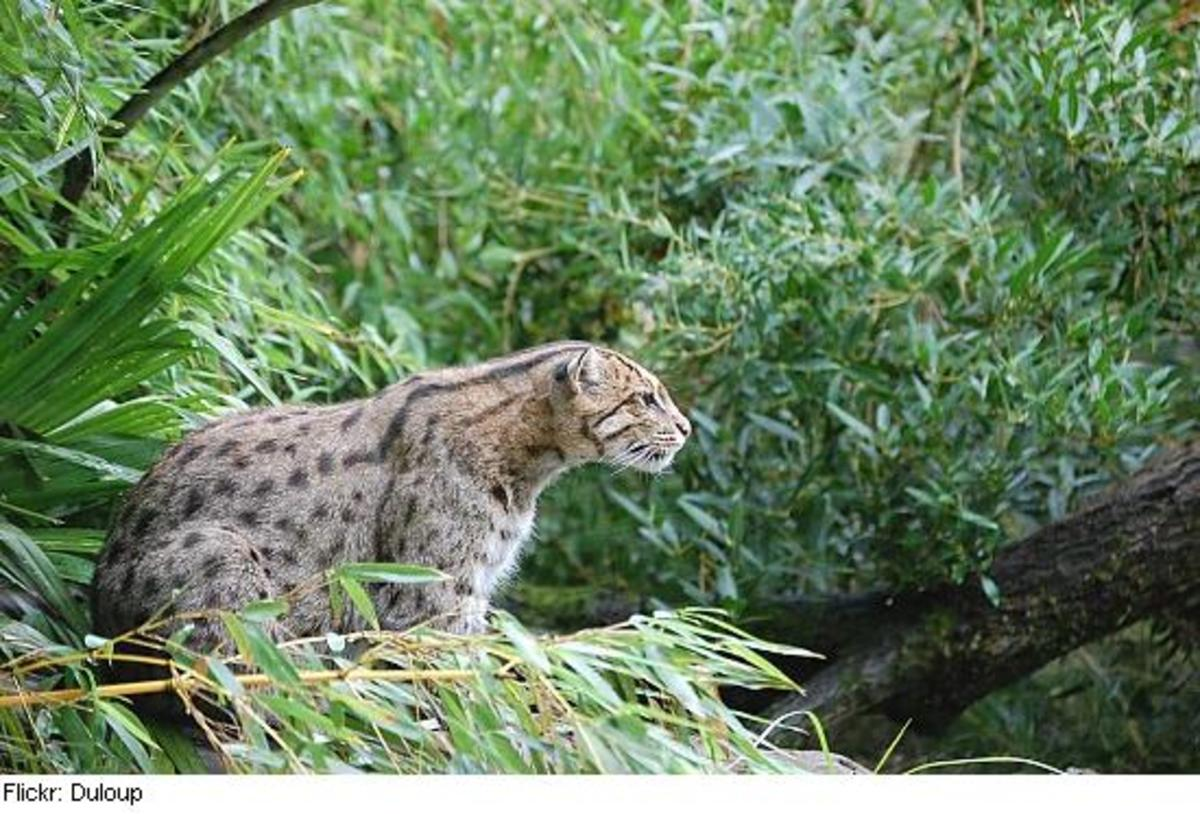 fishingcat3