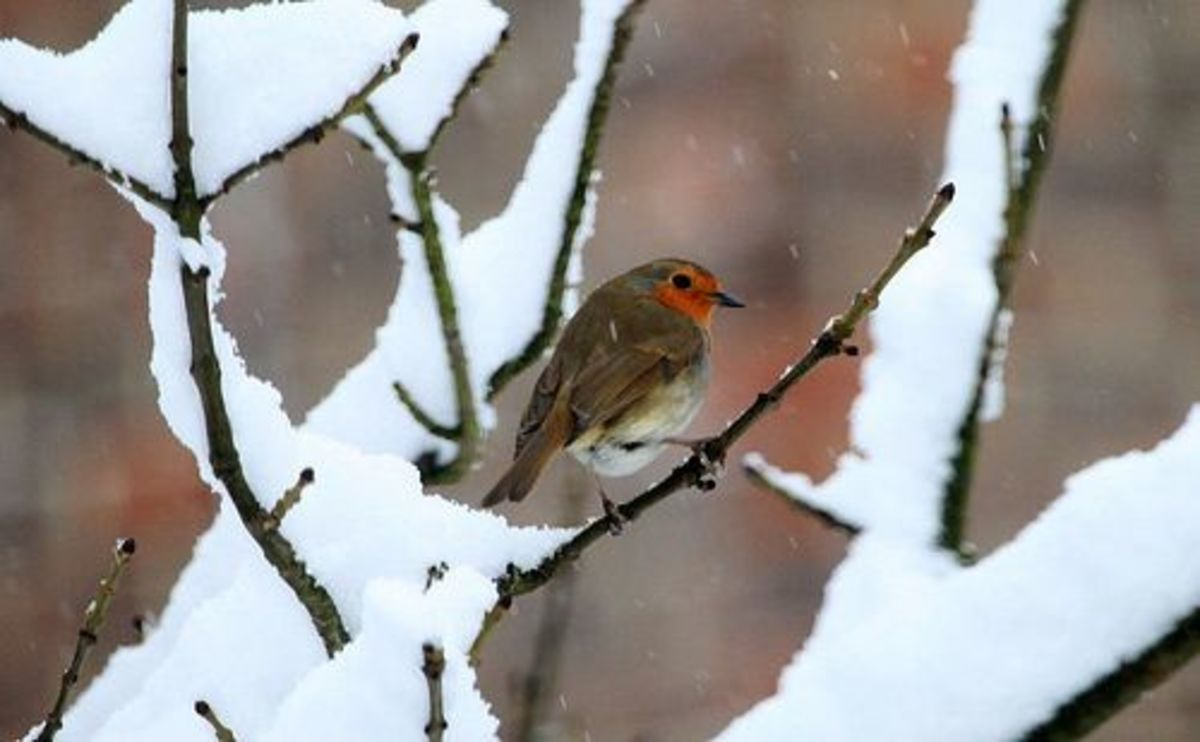 snowbird-ccflcr-johnlinwood