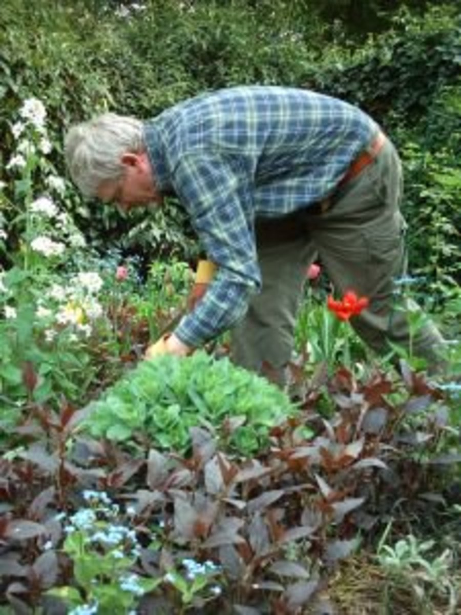 302752_gardening