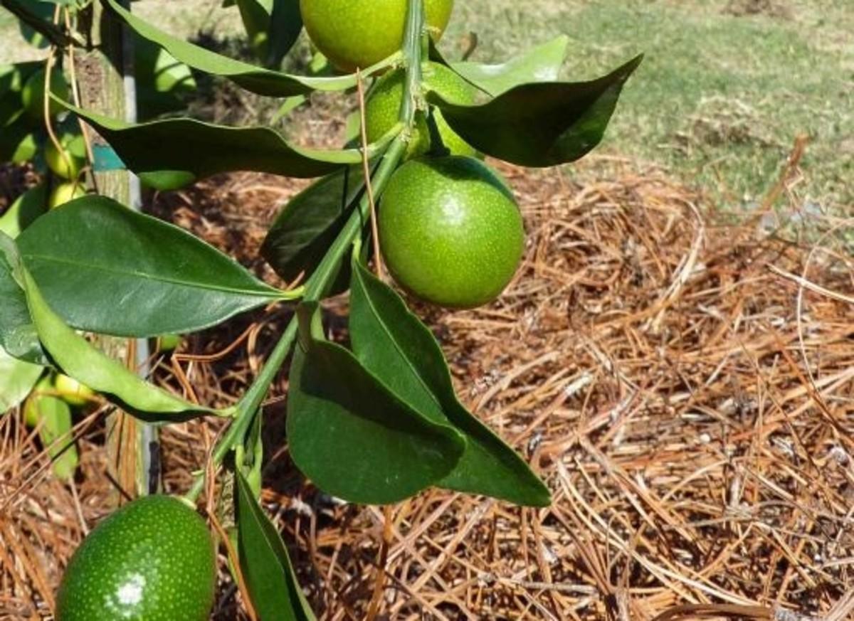 citrus-ftpf-ftpf