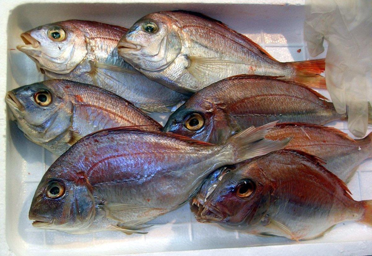 mercury in fish photo
