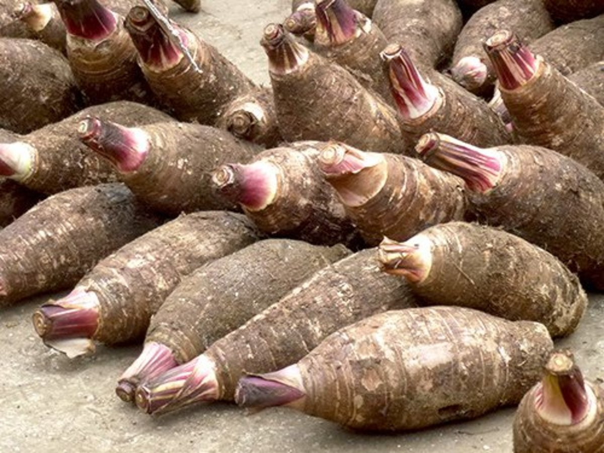 taro root nutrition