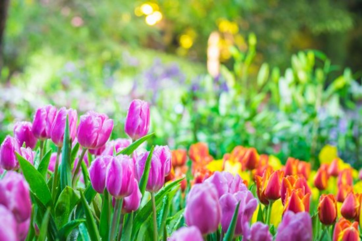 Color Me Happy! 10 Ways to Add Color to Your Spring Garden NOW.