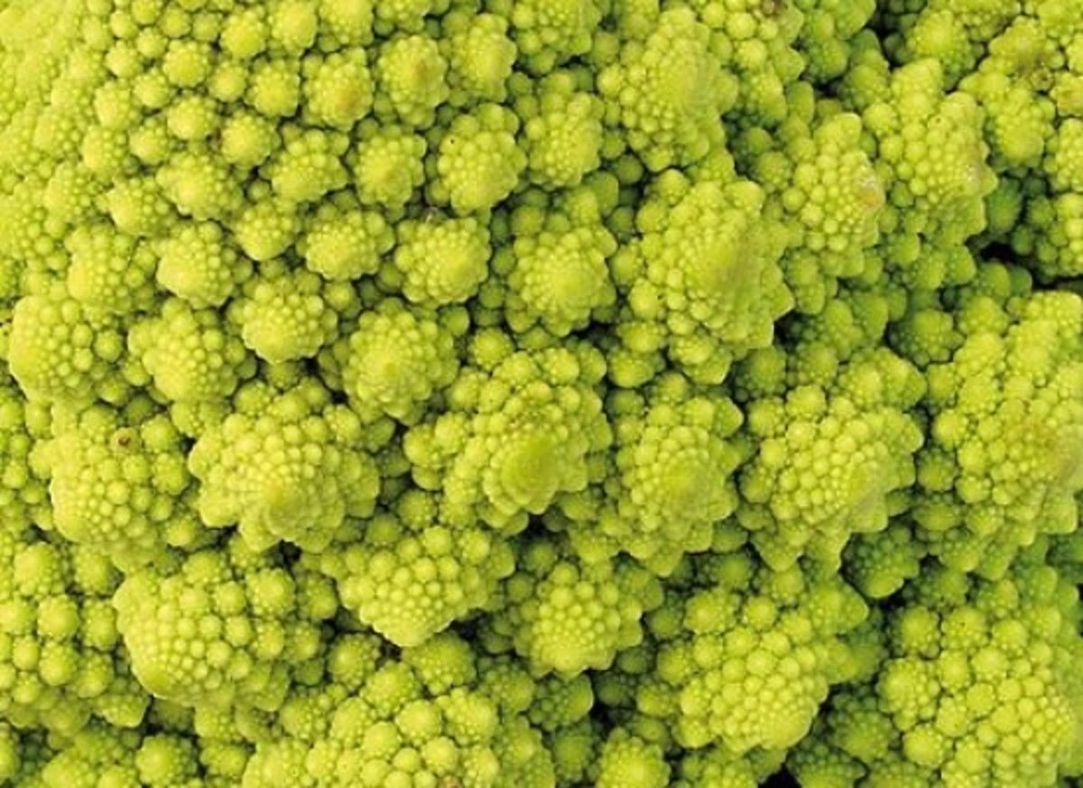 romanescus are a cross between cauliflower and broccoli
