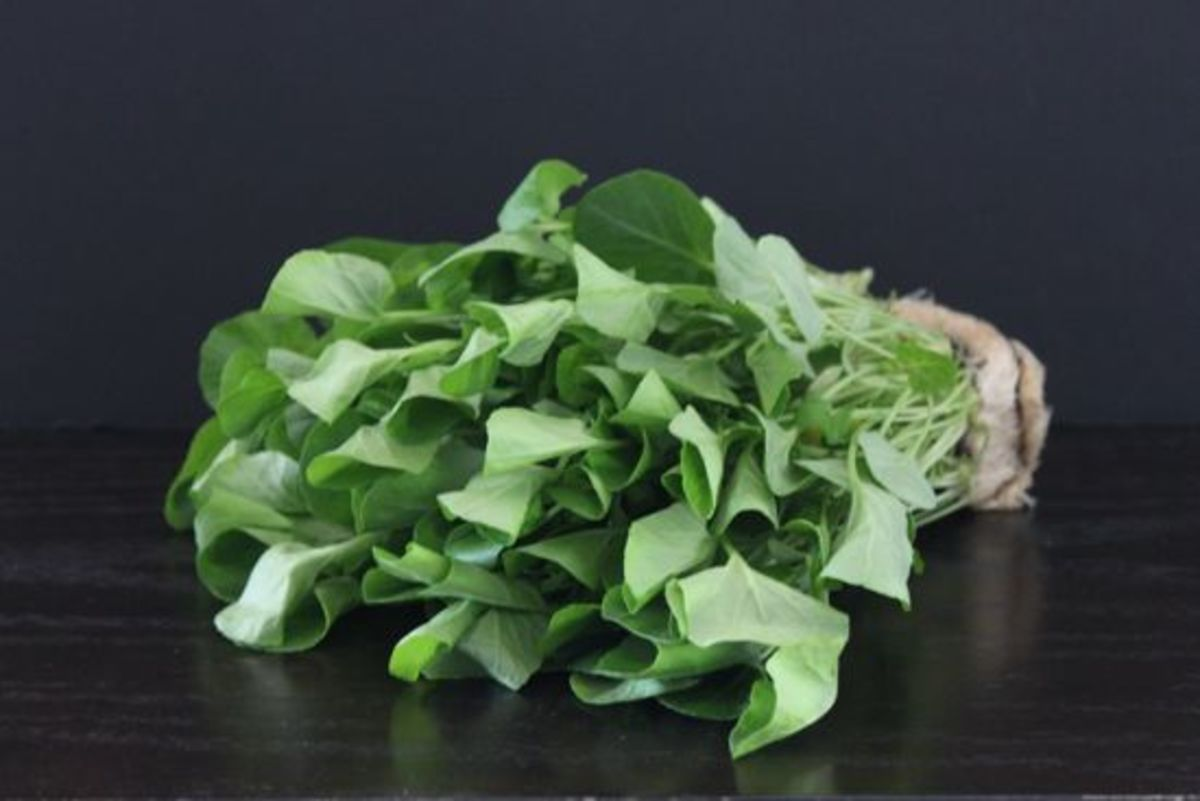 Upland Watercress