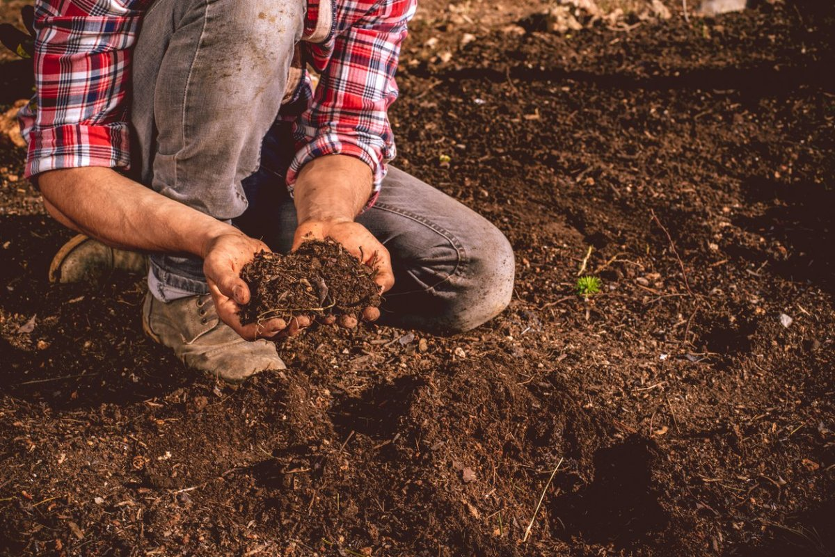 New study shows organic soil has a 26 percent higher for What does soil