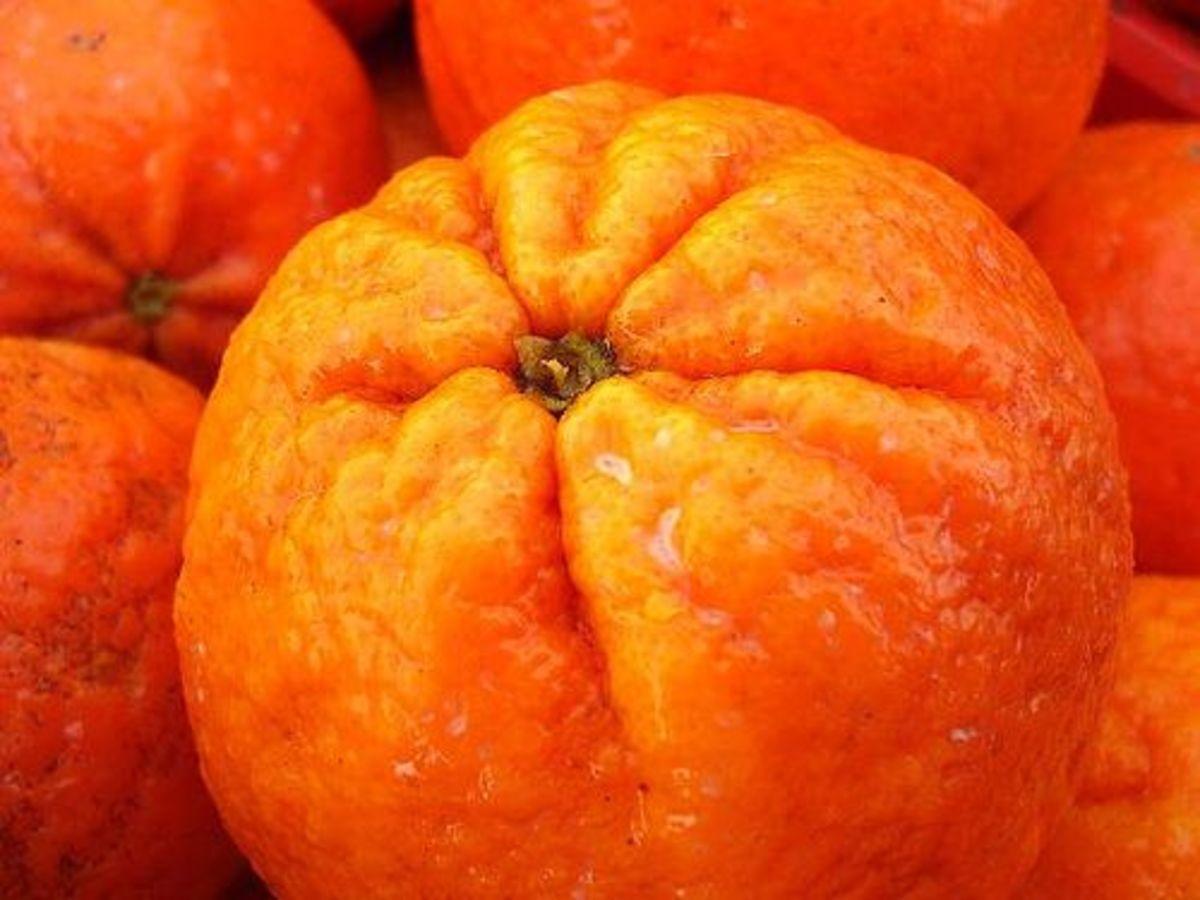 tangerines-ccflcr-srqpix