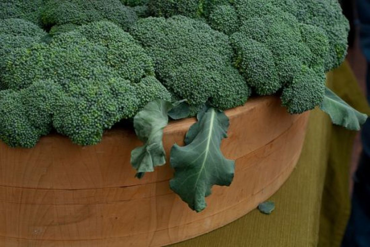 broccoli-ccflcr-clara-s1