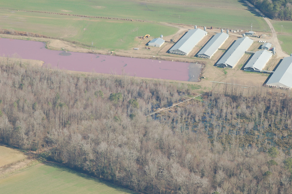 Factory Farm Manure is Pollution: A Washington Judge's Landmark Ruling