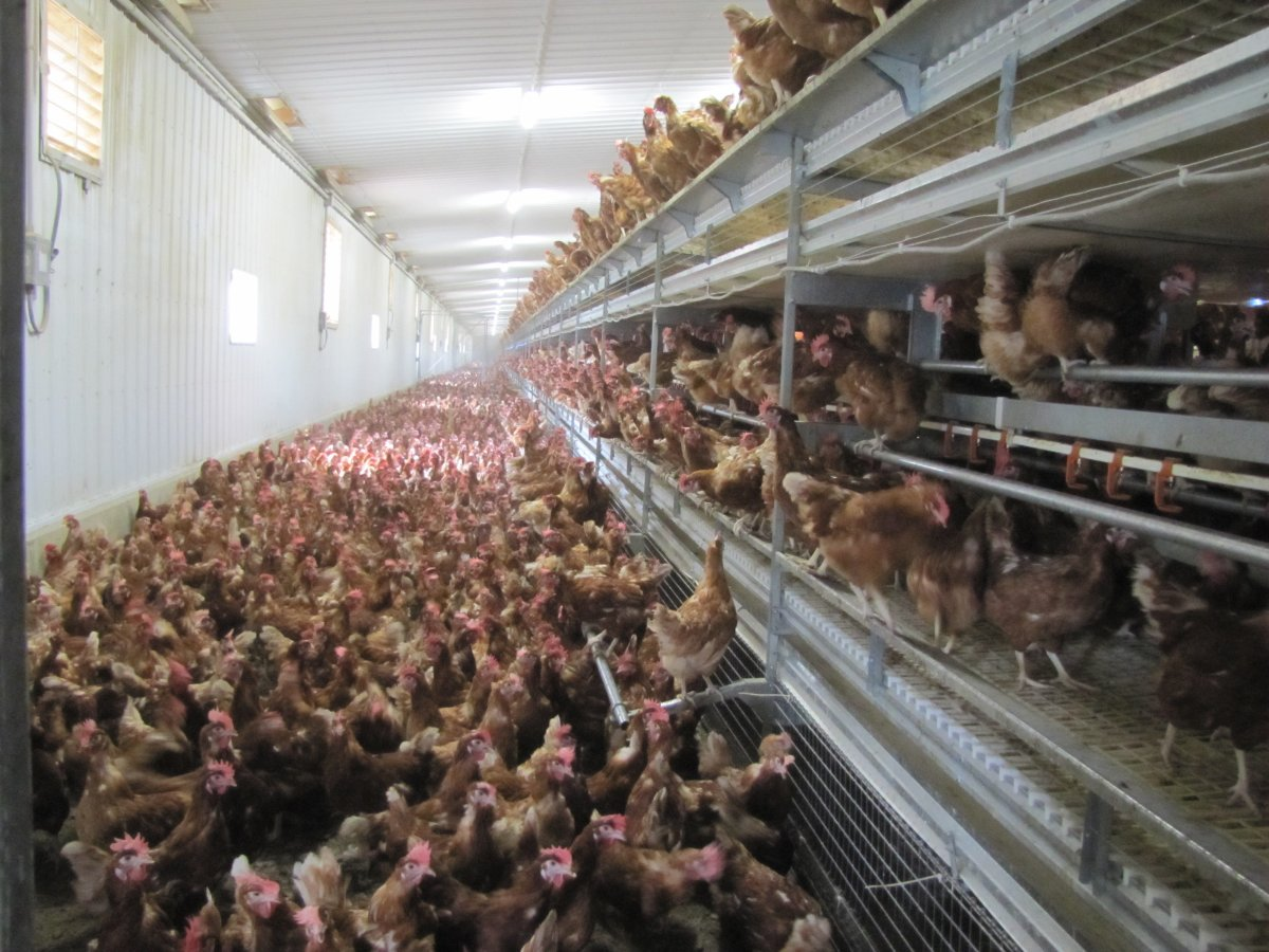 Cage-free egg facility