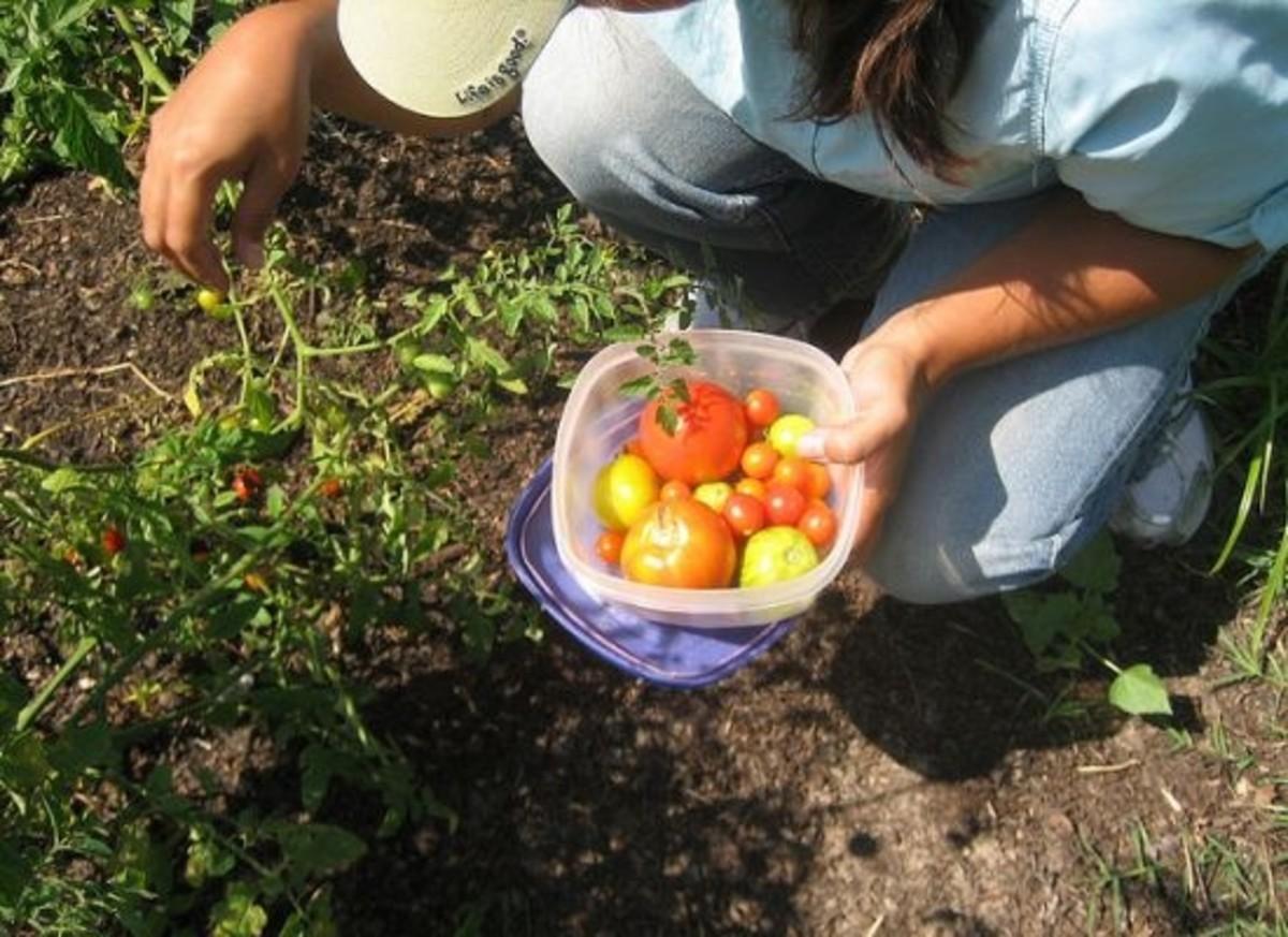 portland-chefs-foraging-private-gardens-ccfl