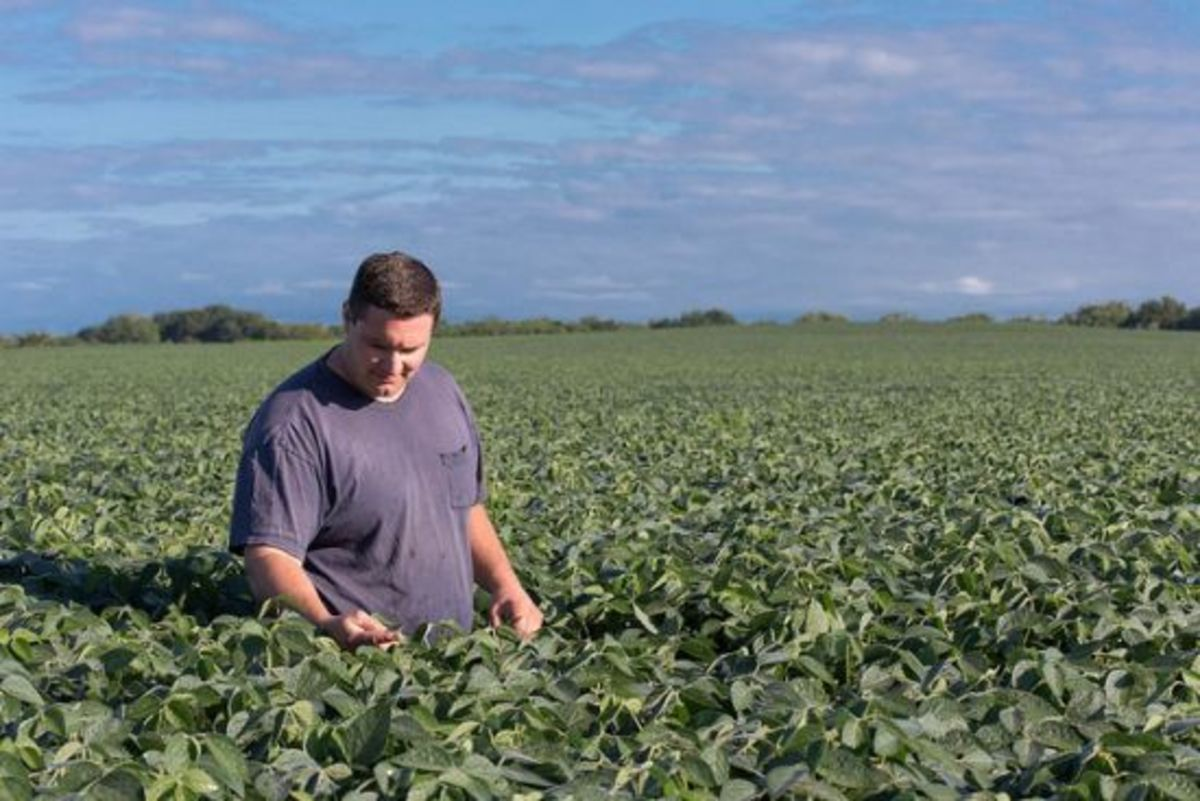 soybeans-ccflcr-unitedsoybeanboard