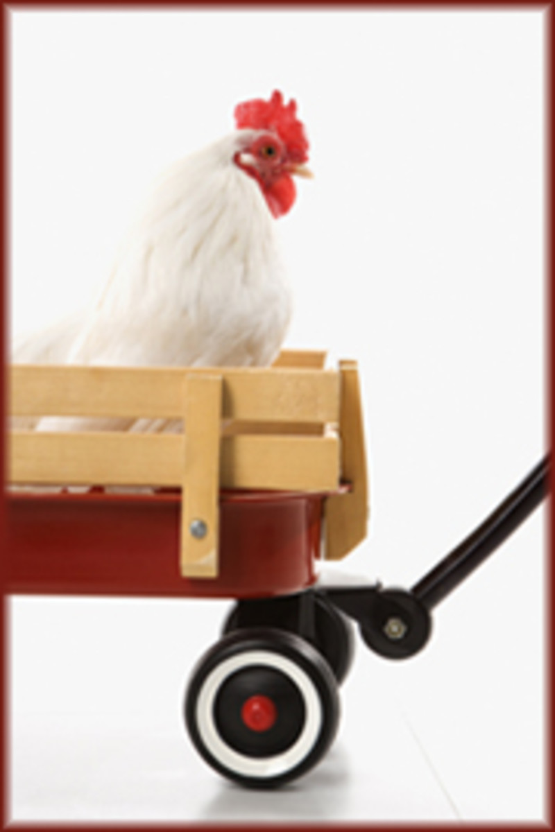 White rooster in red wagon.