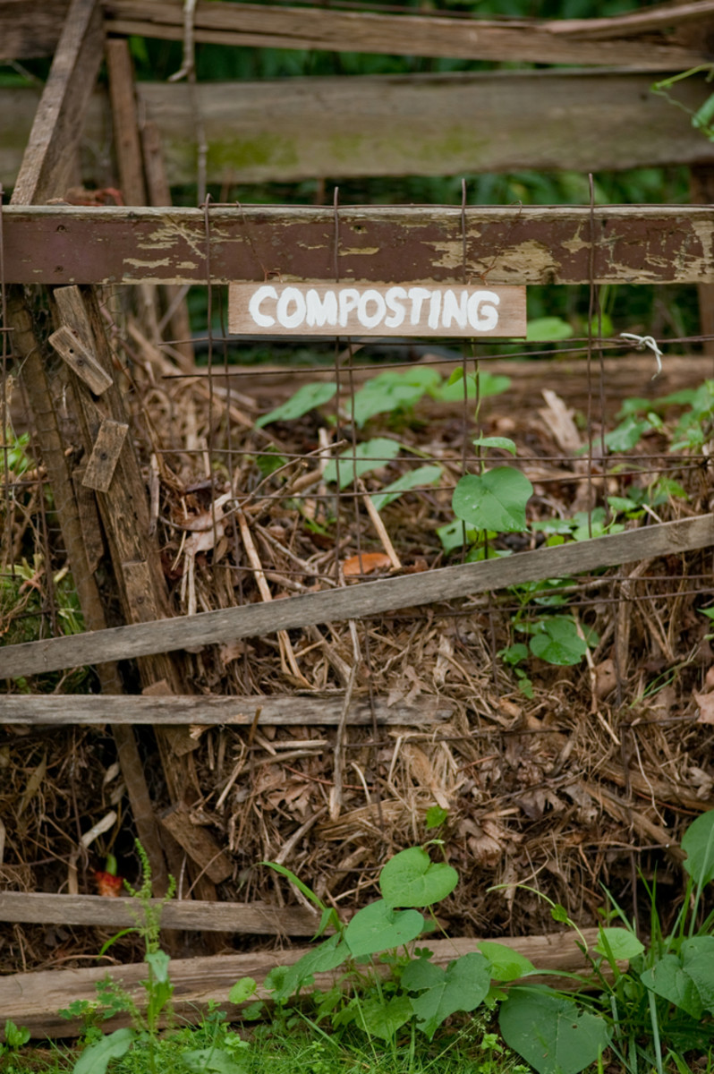 3 Easy Steps to Worm Composting Bins That Won't Gross You Out