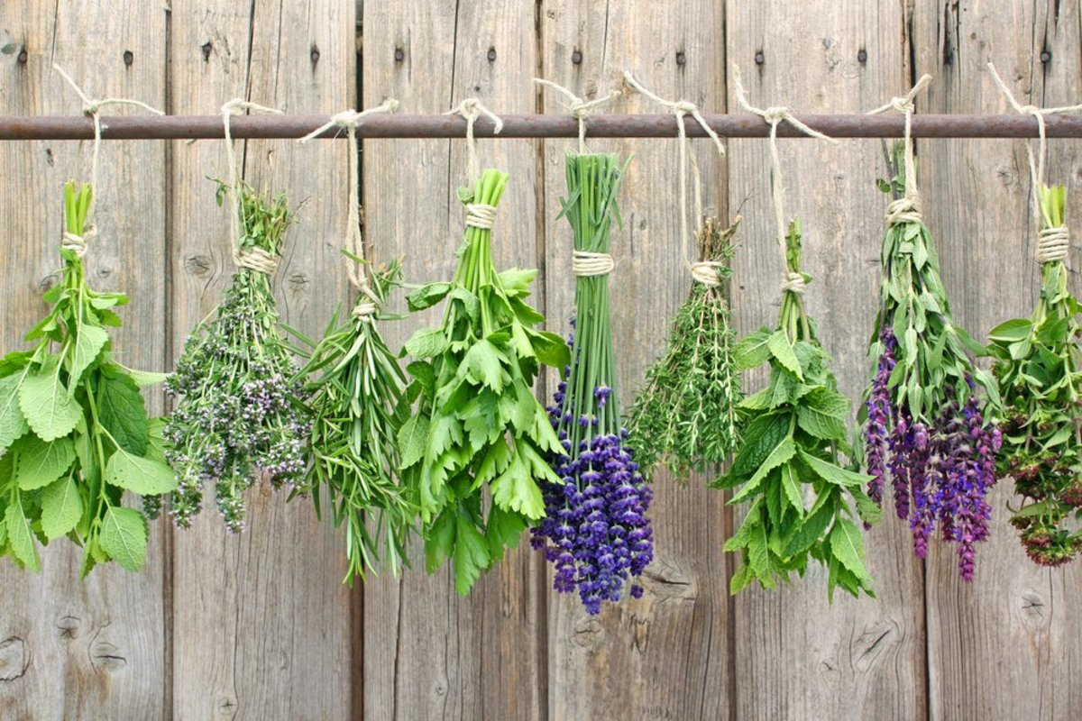 How to Dry Herbs at Home: The 3 Best Ways - Organic Authority