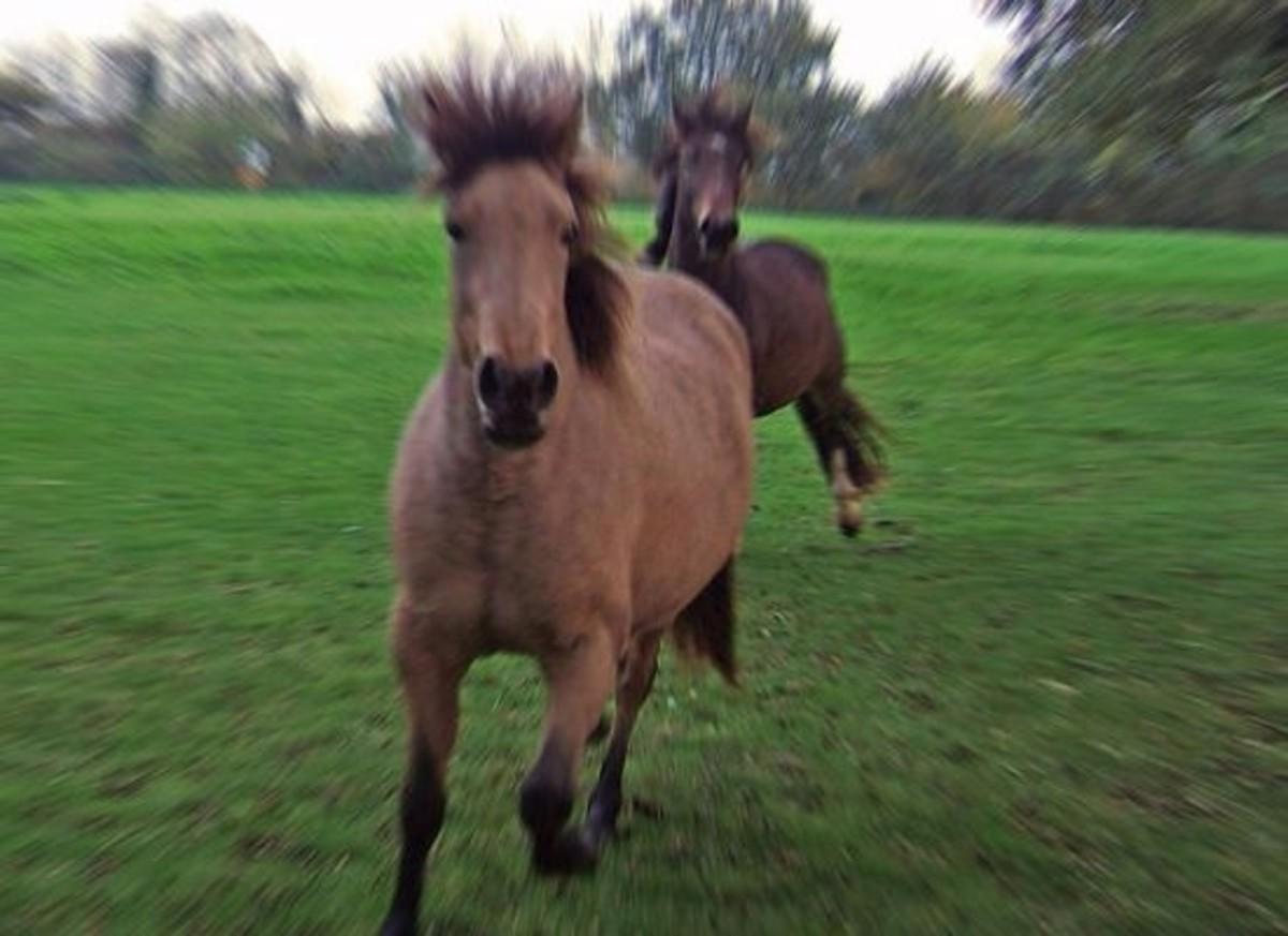 horse-ccflcr-Squeezyboy1