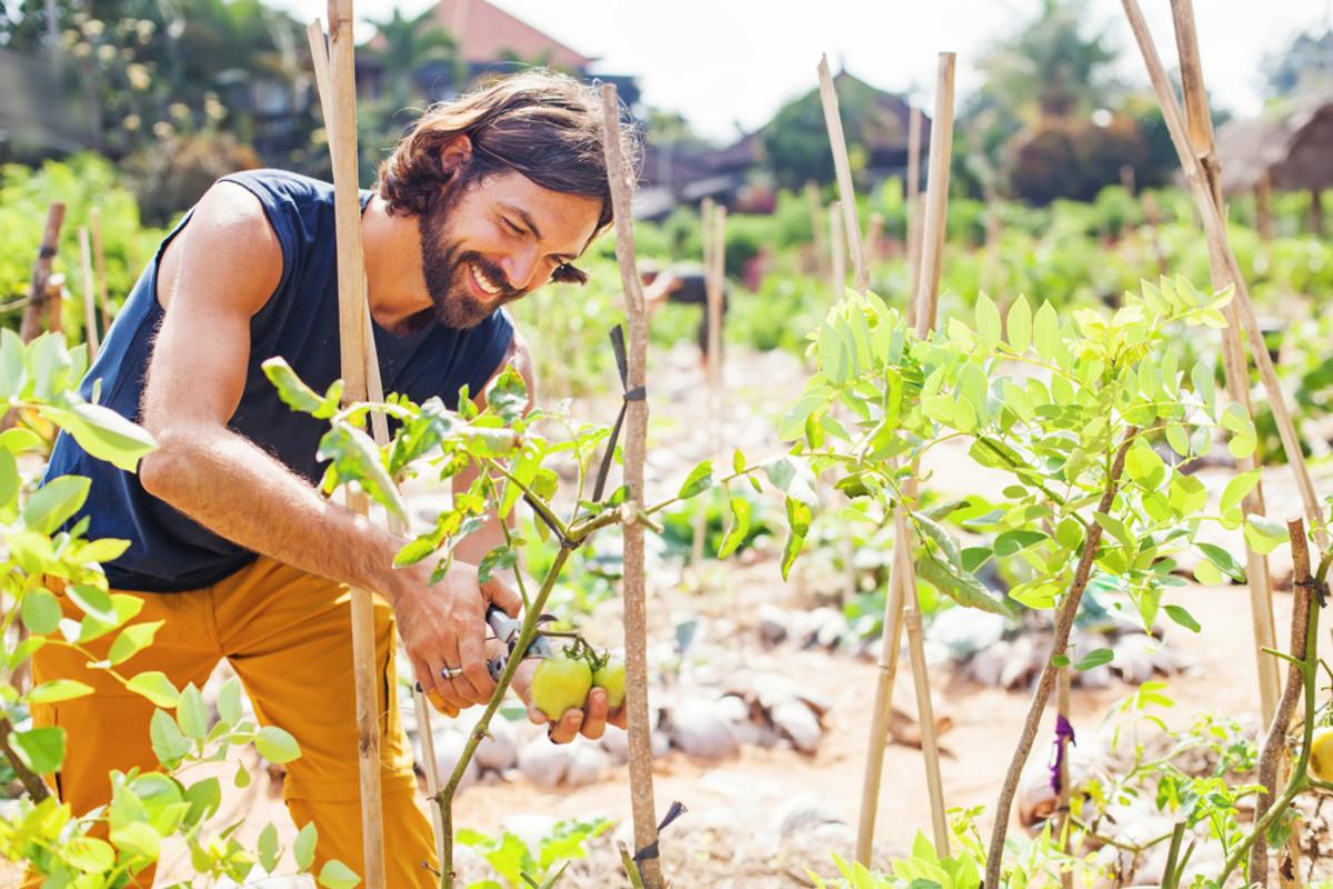 pruning vegetables