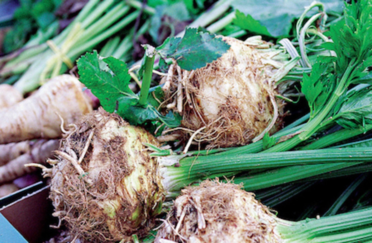 celery root benefits