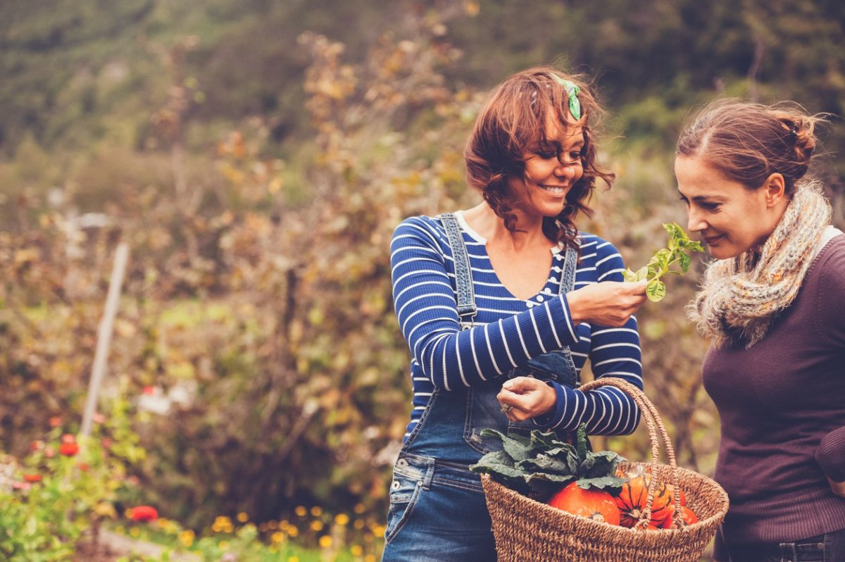 This is How to Grow a Successful Autumn Garden