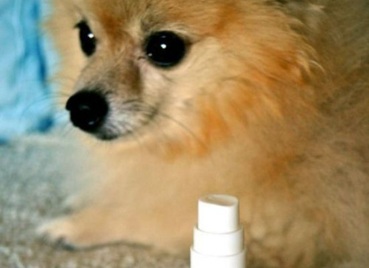 essential oil dog spray