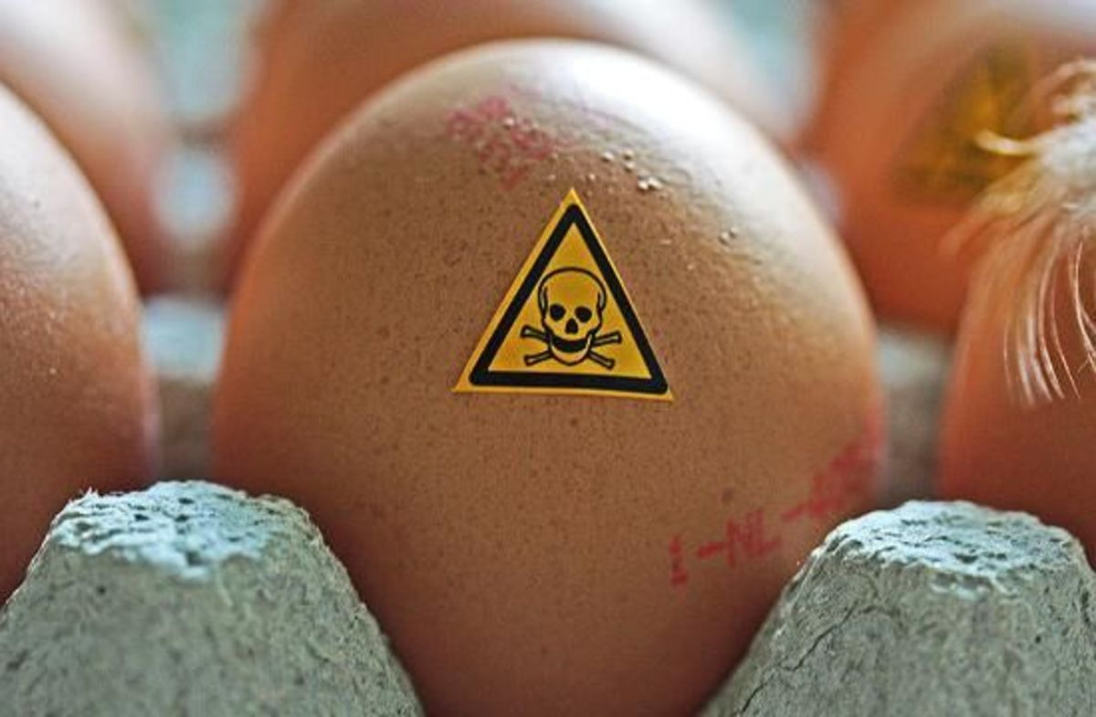 GERMAN EGGS TOXIC