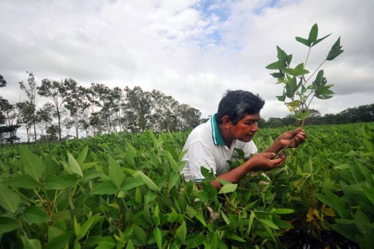 soyfarmer-ccflcr-CIAT-International-Center-for-Tropical-Agriculture1