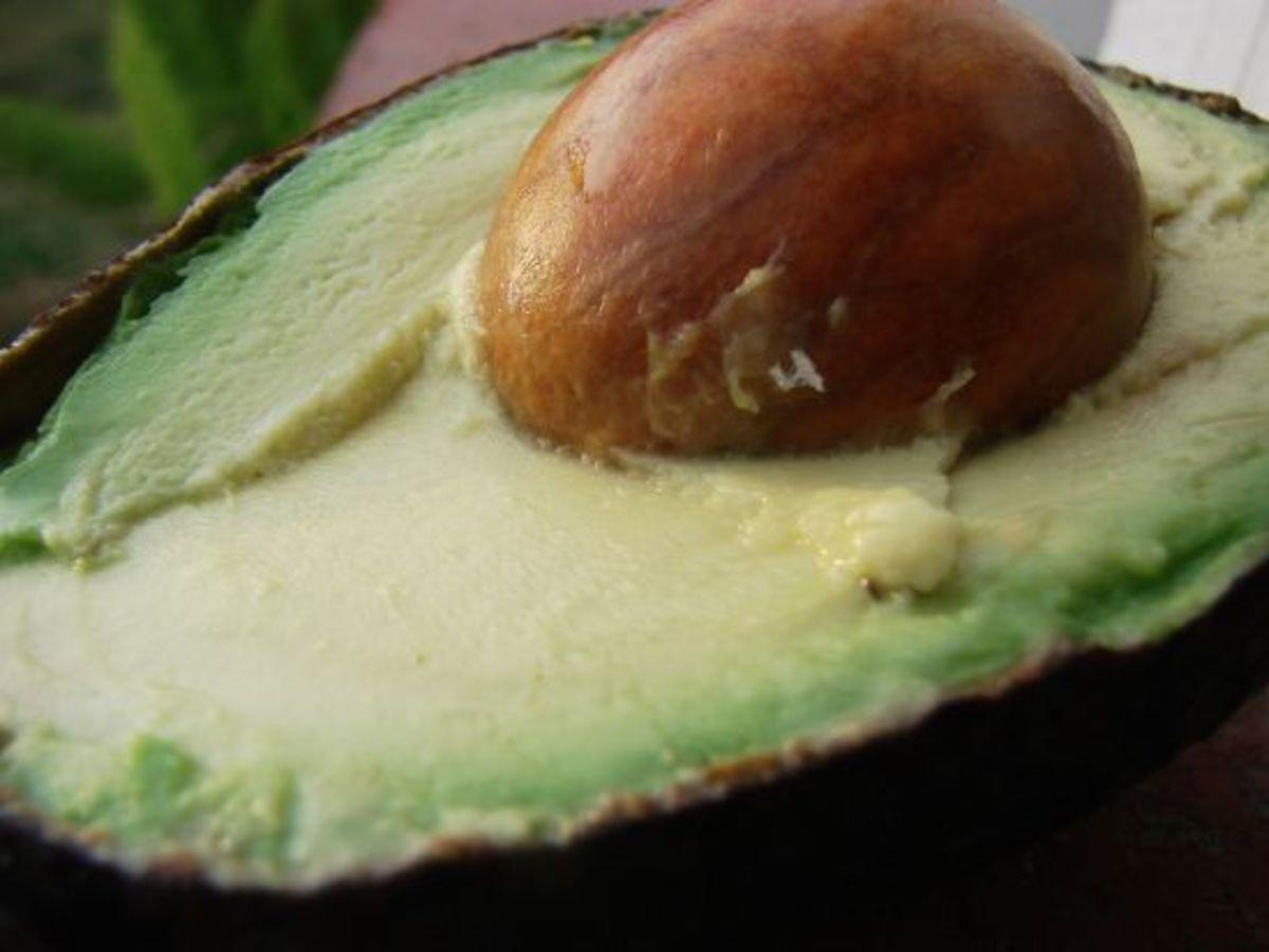 avocado-ccflcr-scelera