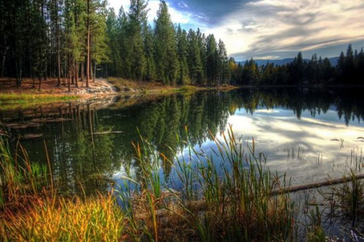pond-ccflcr-SheldonPhotography
