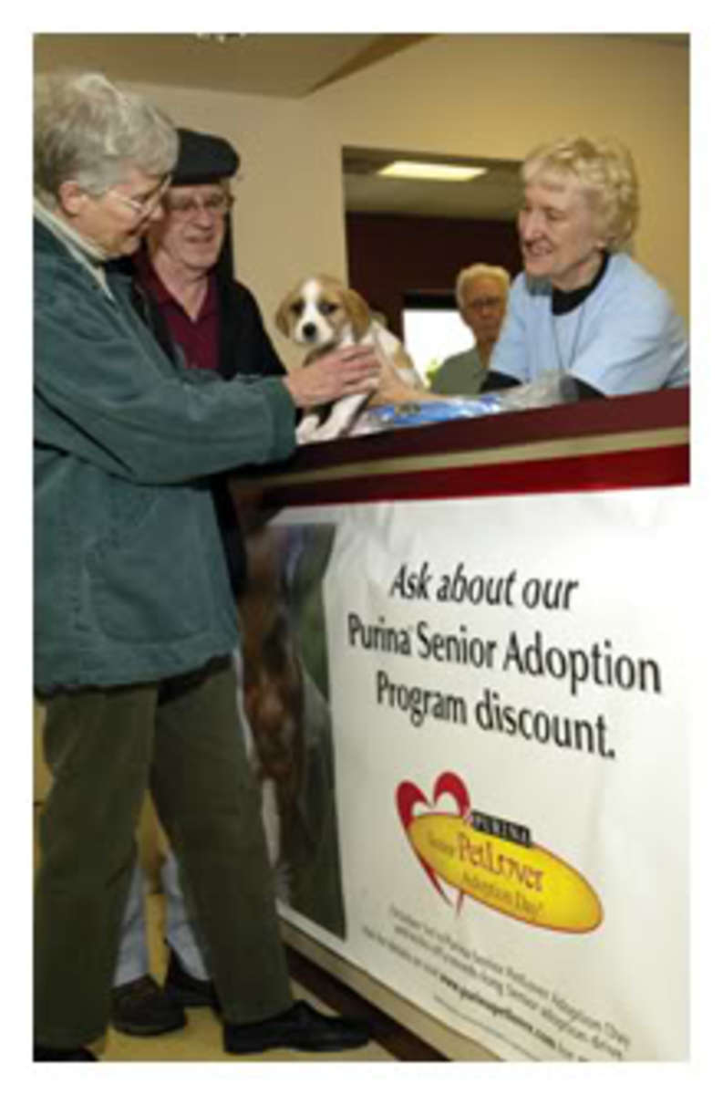 seniorpetadoption1