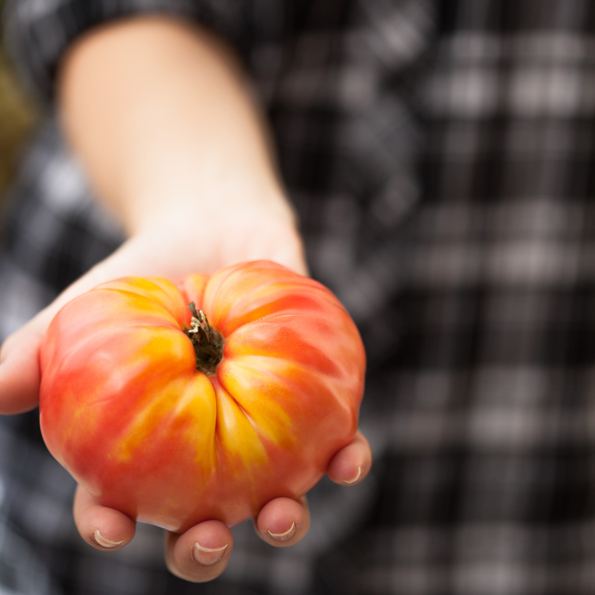 7 Steps to Save Heirloom Tomato Seeds and Start Your Own Seed Bank