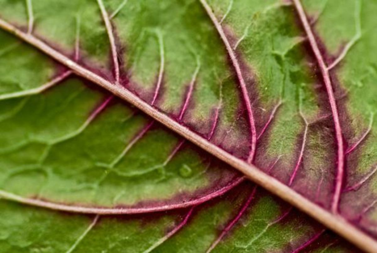 spinach-ccflcr-Stewart