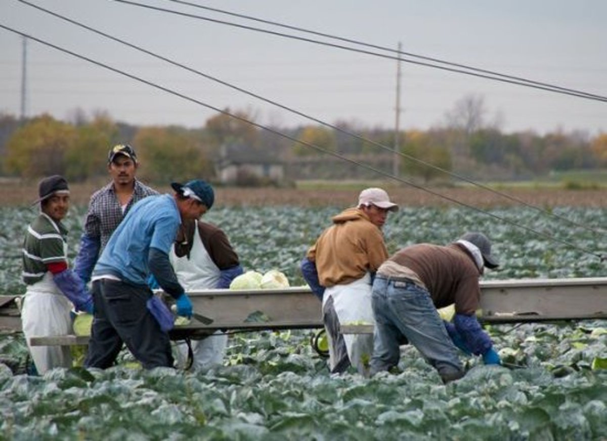 New report highlights unfair treatment of american farmworkers