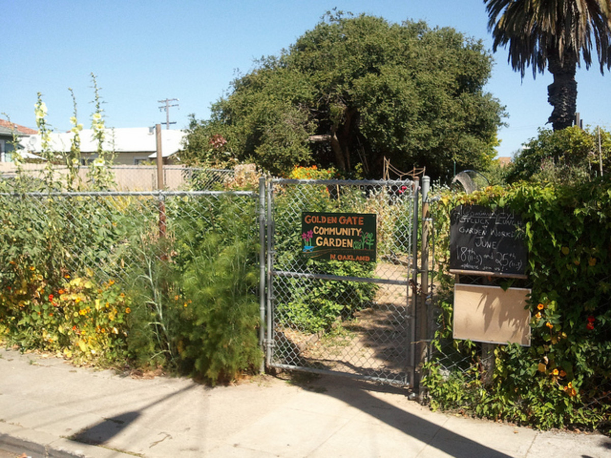 7 steps to start a community garden all you need to get growing - How To Start A Community Garden