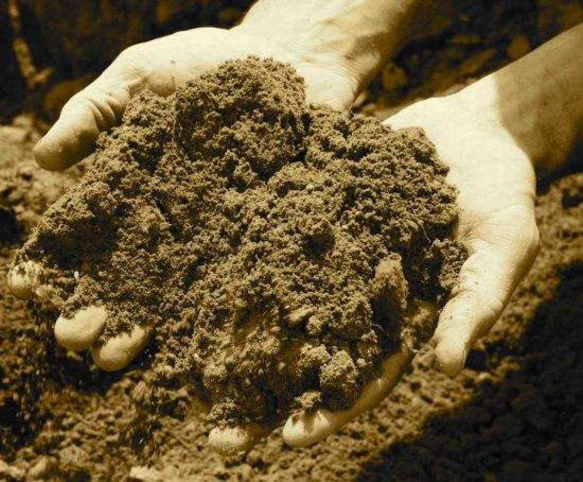 soil-ccflcr-jillettinger