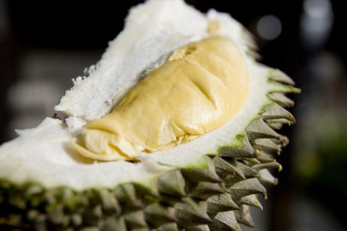 durian-ccflcr-kewynn